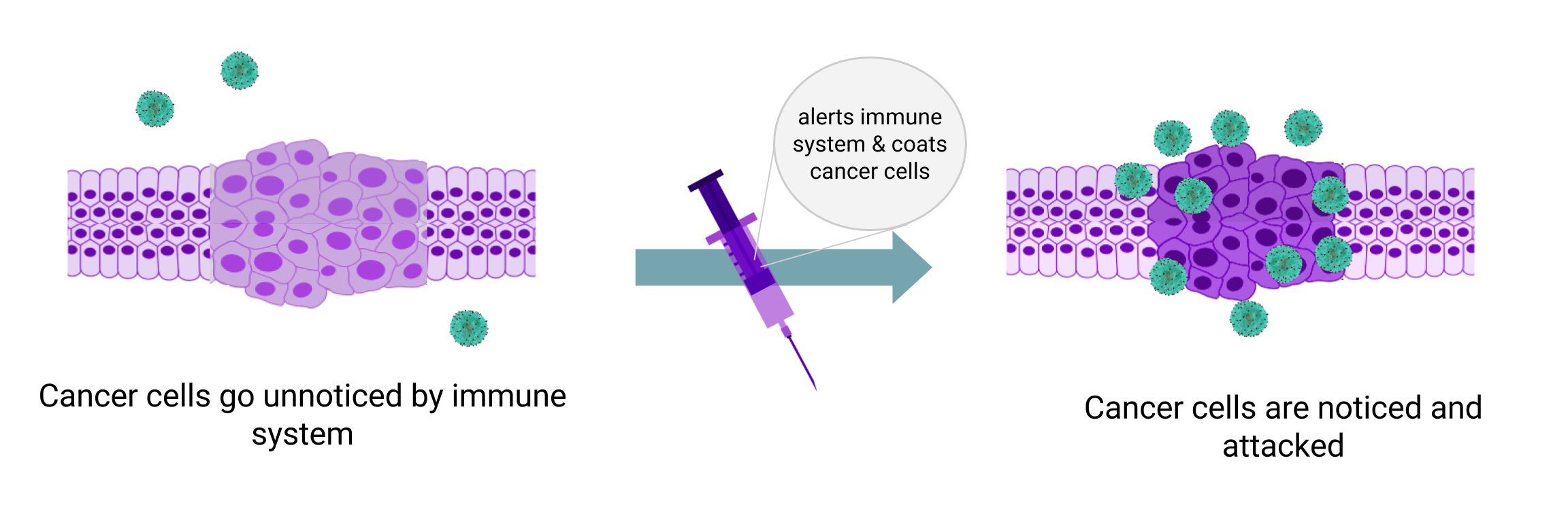 Immunoengineering a Better Cancer Treatment