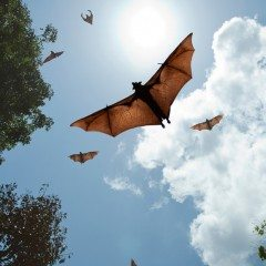 Lost: How Bats are Helping People Find Their Way Home